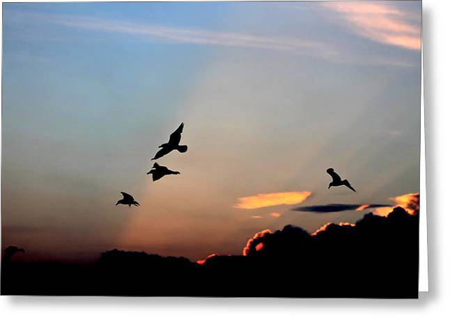 Evening Dance In The Sky Greeting Card