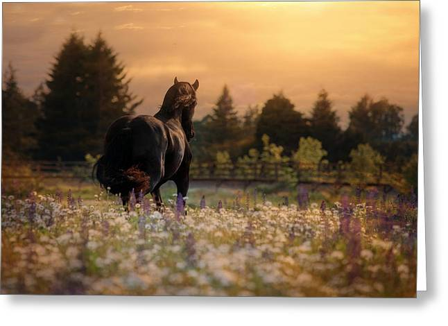 Evening Falls Greeting Card by Pamela Hagedoorn