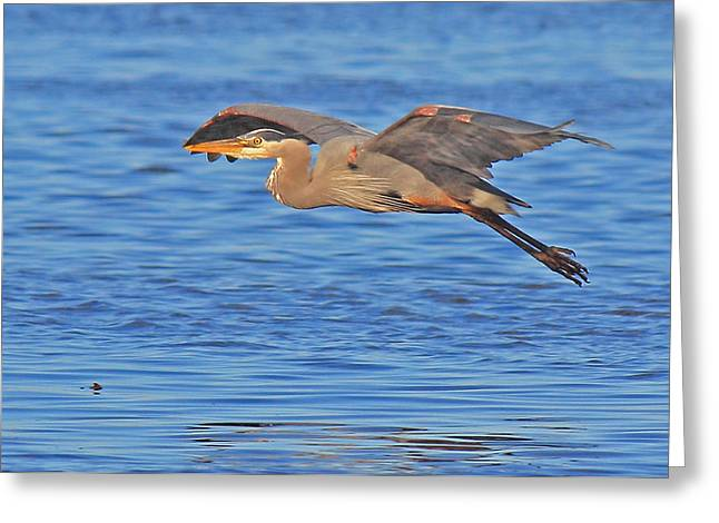Evening Flight Greeting Card by Randy Hall