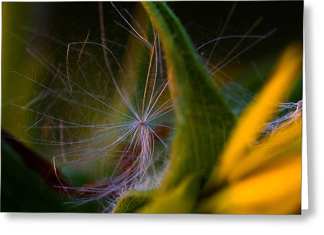 Evening Fluff Greeting Card by Haren Images- Kriss Haren