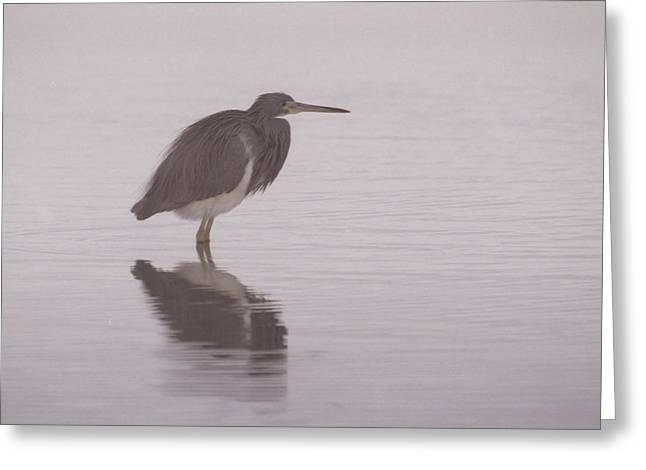 Evening Heron Greeting Card