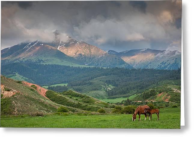 Evening Horses Greeting Card by Konstantin Dikovsky