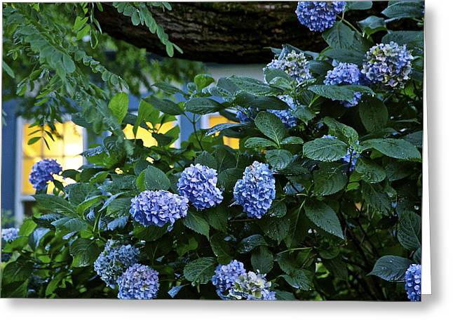 Evening Hydrangeas Greeting Card