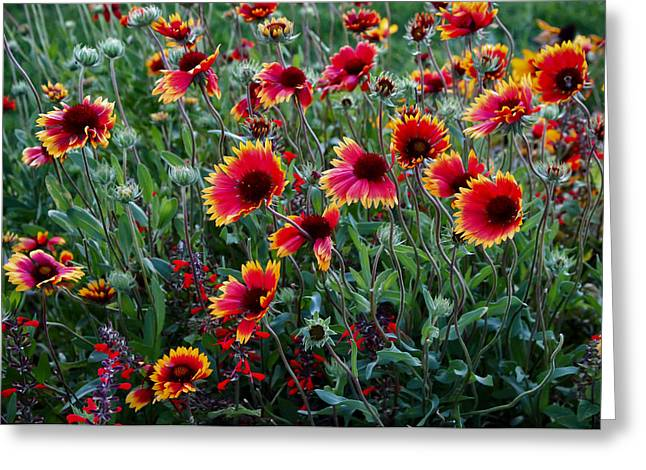 Evening In Bloom Greeting Card