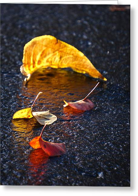 Evening Leaves On Wet Pavement Greeting Card by Ronda Broatch