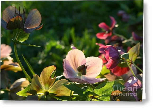 Greeting Card featuring the photograph Evening Light by Liz  Alderdice