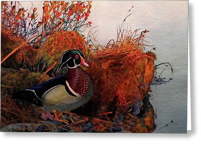 Evening Light Wood Duck Greeting Card by Ken Everett
