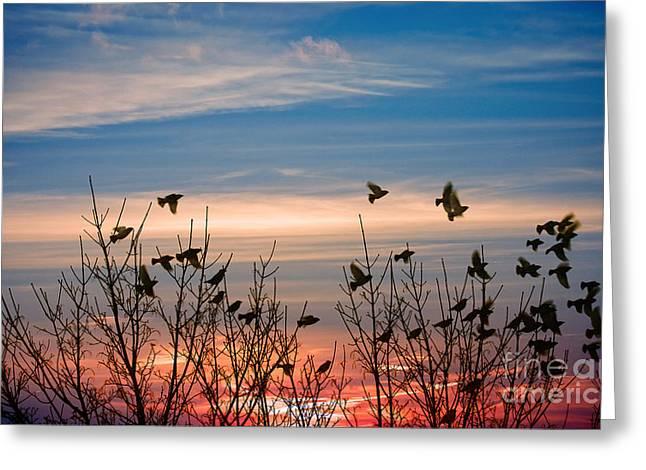 Evening Migration Greeting Card by Jolanta Meskauskiene