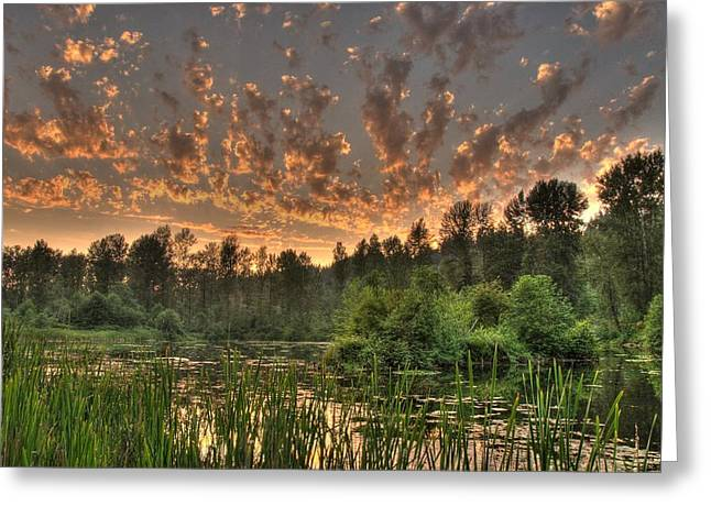 Evening Pond Greeting Card by Jeff Cook