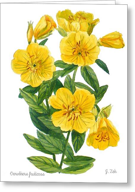 Evening Primrose - Oenothera Fruticosa Greeting Card
