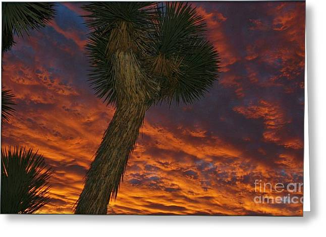 Evening Red Event Greeting Card