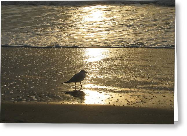 Evening Stroll For One Greeting Card by Judith Morris