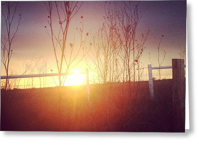 Evening Sun Greeting Card by Tara Harper