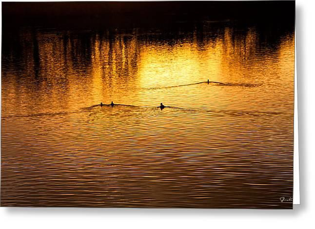 Evening Swim Greeting Card by Jardi Welsch