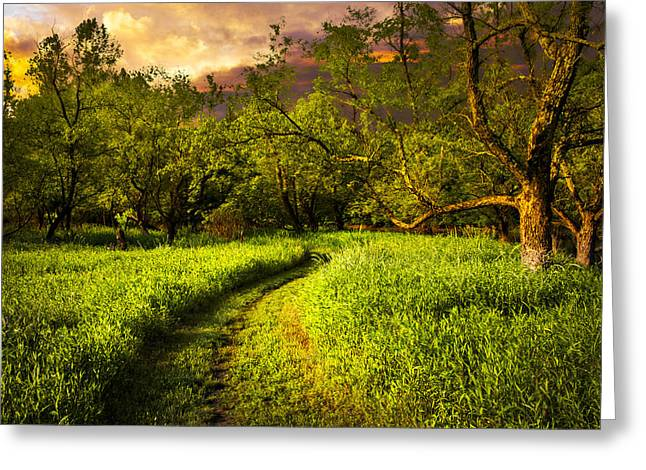Evening Trail Greeting Card