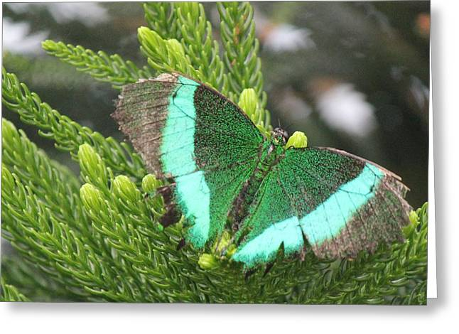 Ever Green Butterfly Greeting Card by Bill Woodstock