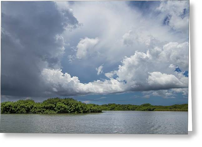 Everglades 0257 Greeting Card by Rudy Umans