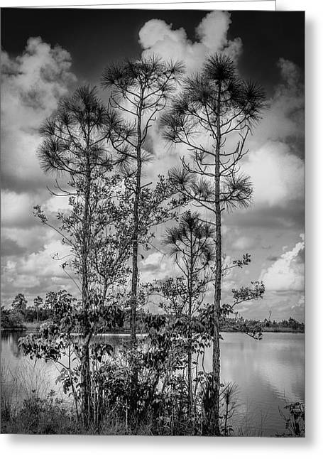 Everglades 0336bw Greeting Card
