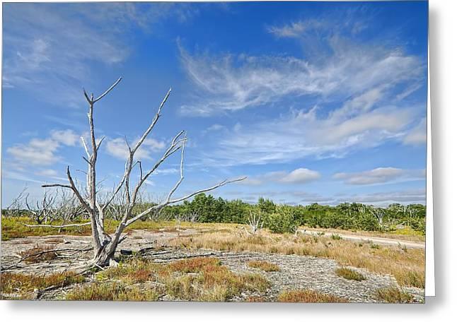 Everglades Coastal Prairies Greeting Card by Rudy Umans