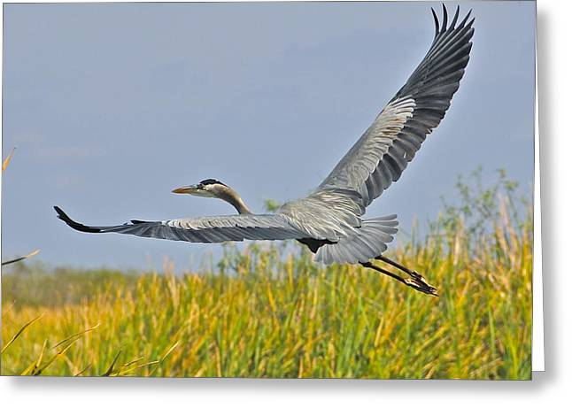 Everglades Flight Greeting Card