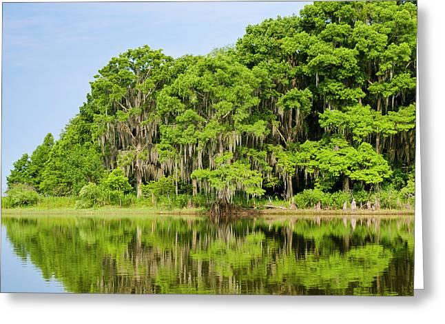 Everglades Florida Greeting Card by Michael Defreitas