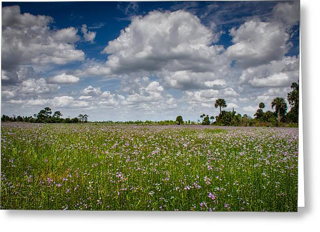 Everglades Spring Greeting Card