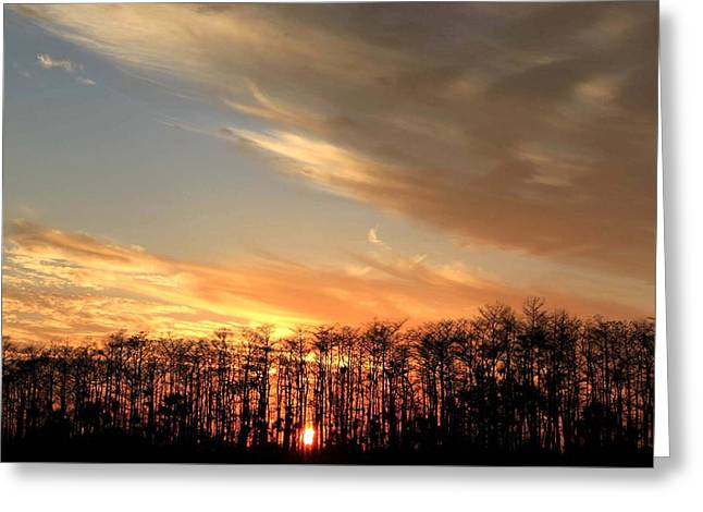 Everglades Sunset Greeting Card by AR Annahita
