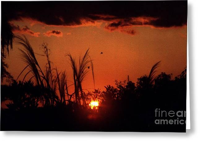 Everglades Sunset Greeting Card by Steven Valkenberg