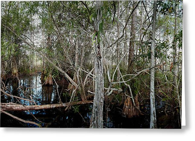 Everglades Swamp-1 Greeting Card