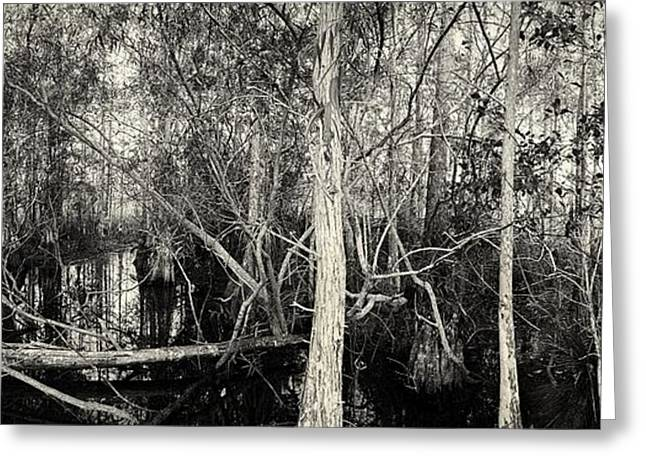 Everglades Swamp-1bw Greeting Card by Rudy Umans