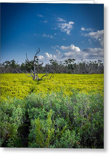 Everglades Tree Greeting Card