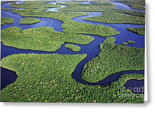 Everglades Waterways Greeting Card