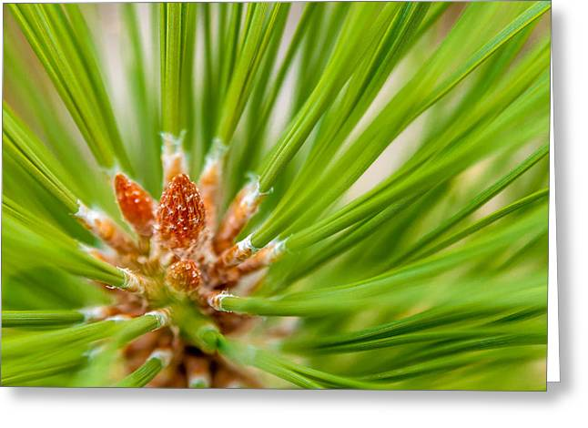 Evergreen 001 Greeting Card by Todd Soderstrom