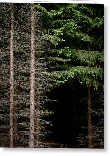 Evergreen And Brown Greeting Card by Odd Jeppesen