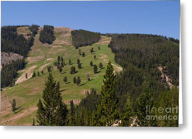 Evergreen Hillside Greeting Card by Charles Kozierok