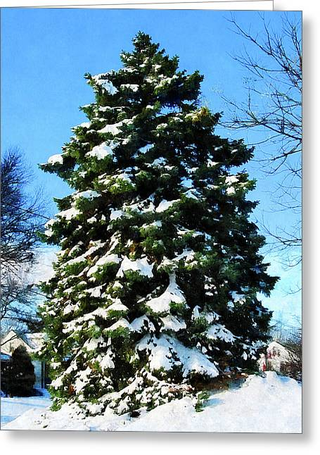 Evergreen In Winter Greeting Card by Susan Savad