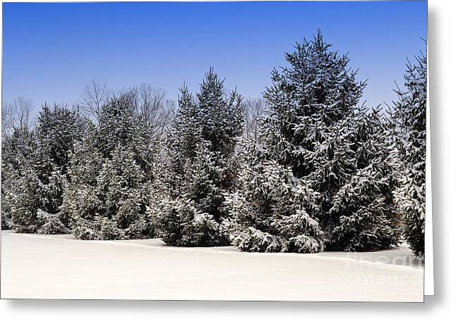Evergreen Trees In Winter Greeting Card