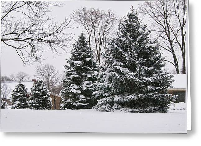Evergreens In The Snow Greeting Card