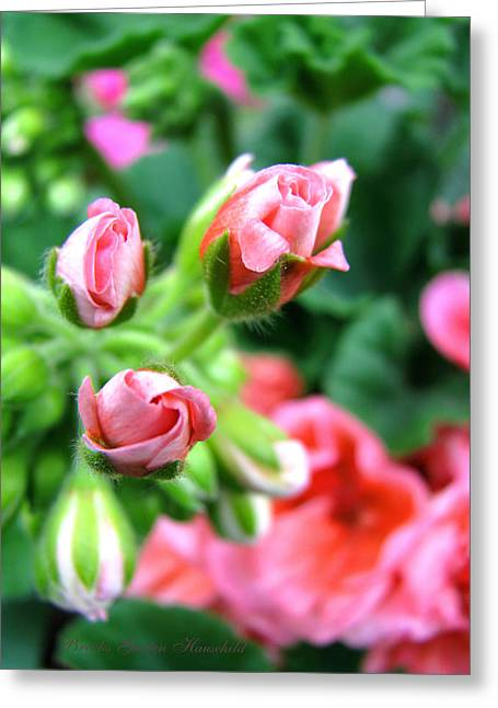 Greeting Card featuring the photograph Everything's Coming Up Geraniums by Brooks Garten Hauschild
