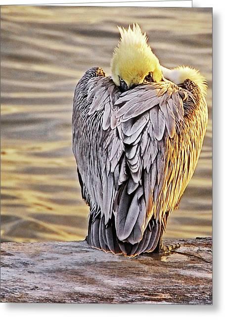 Evil Eye Pelican Greeting Card