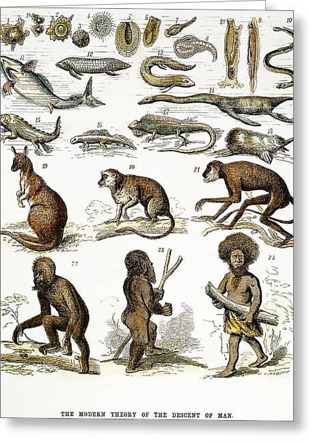Evolution Chart Greeting Card by Granger