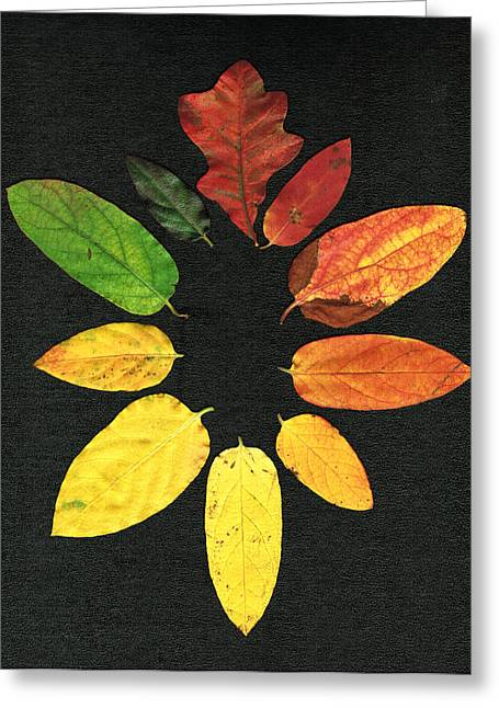 Evolution Of Autumn Bk Greeting Card by Pete Trenholm