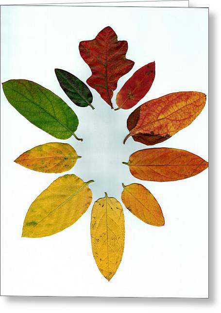 Evolution Of Autumn Wh Greeting Card by Pete Trenholm