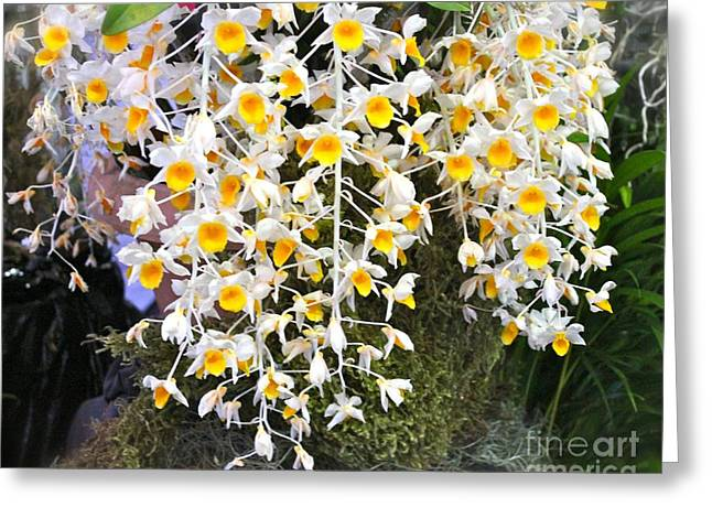 Exotic Aerides Greeting Card