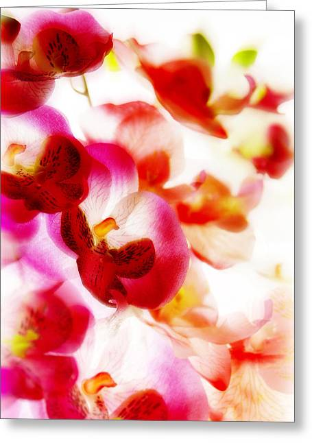 Exotic Dream Greeting Card