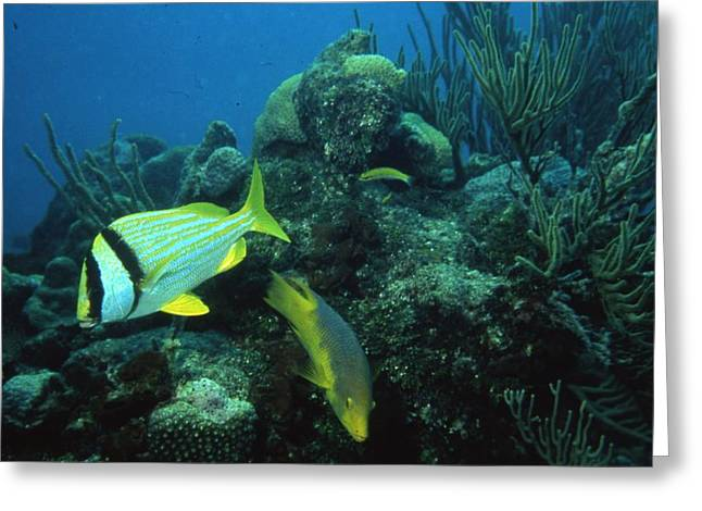 Exotic Fish Greeting Card by Retro Images Archive