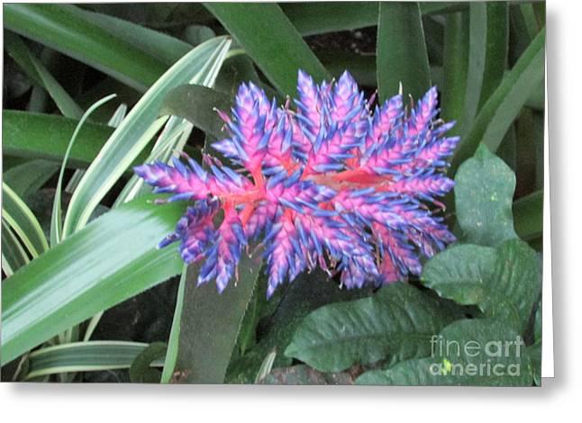 Exotic Flower Greeting Card by Nancy Rucker