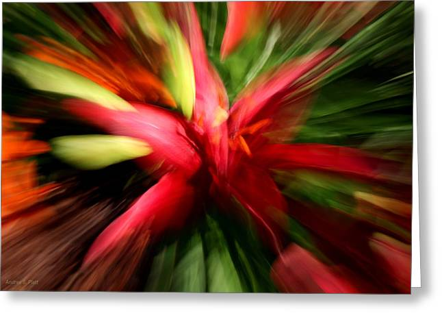 Exploding Lily Greeting Card