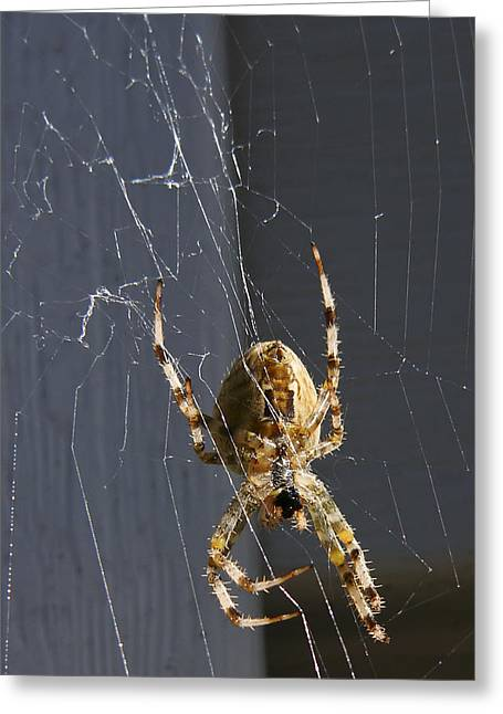 Greeting Card featuring the photograph Exploring The Web by Rhonda McDougall