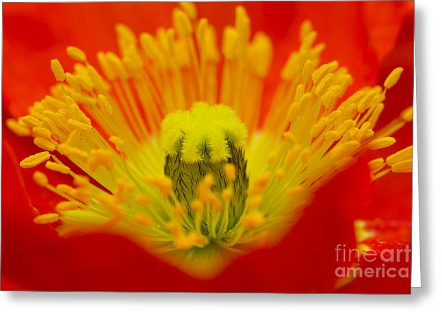 Explosion Of Colour Greeting Card by Carole Lloyd